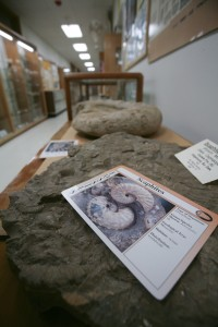 Rocks and fossils on display at the Earth Science Museum in San Antonio, TX