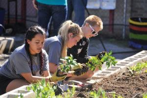 Students planting plants