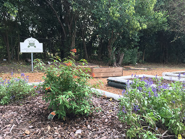 Community Garden at St. Mary's Univeristy