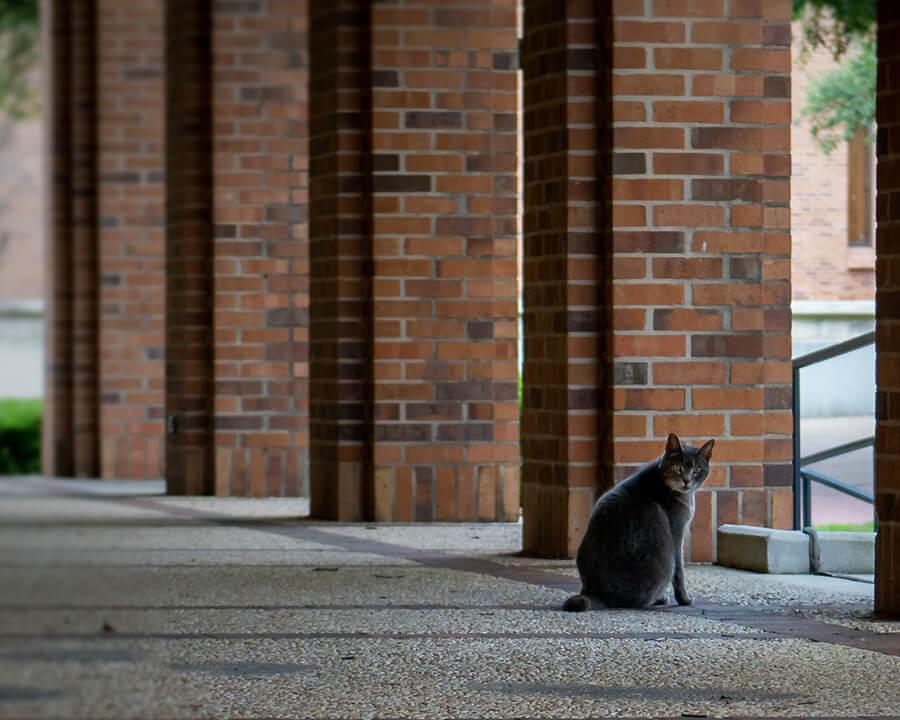 Solo grey cat with brick pillars behind