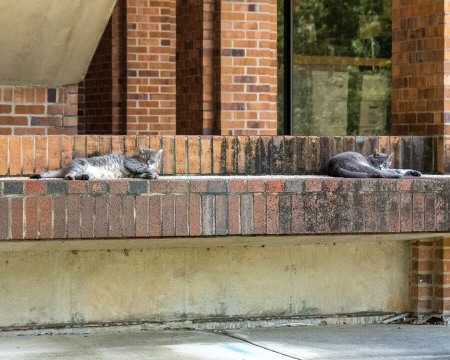 two light grey cats lounge on brick benches